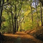 Herbst_WWeg_Laub_Baum_Blatt