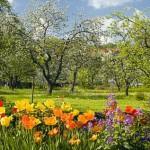 TB_Garten_Frühjahr